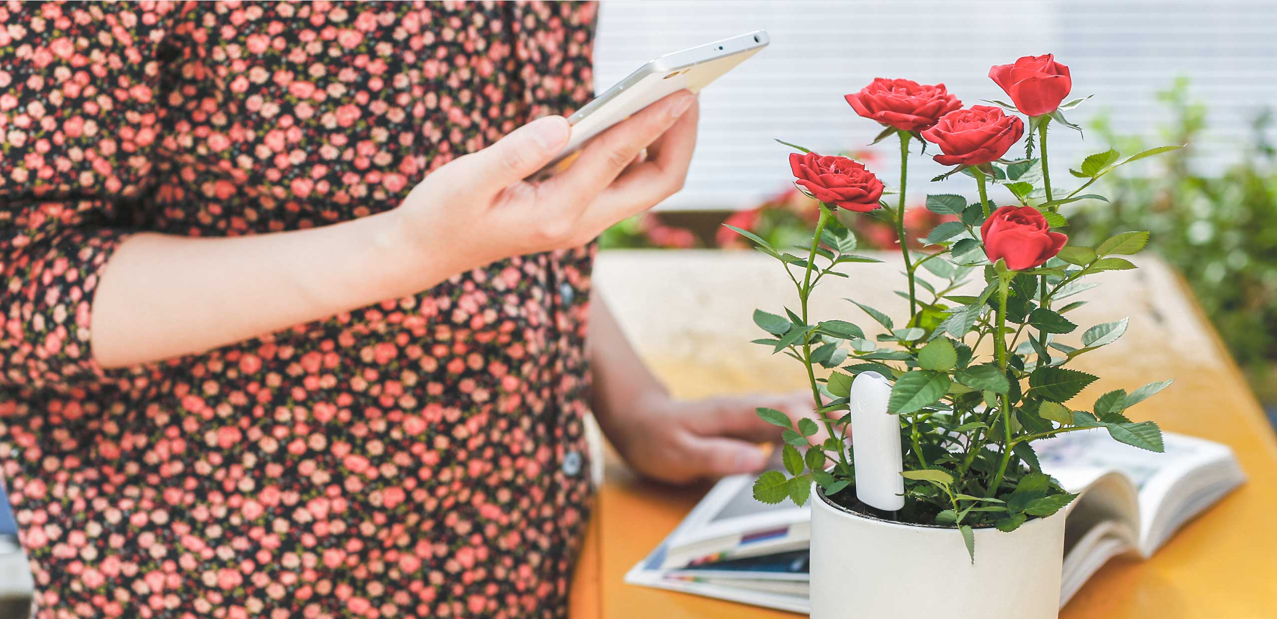 House Plant Identification Tool - Keep being curious about the nature our app can help you to identify 3000 kinds of plants